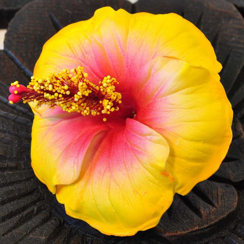 Flowers Artificial Hibiscus Yellow Buy Cheap And Easy