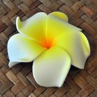 Flowers artificial Thai Lilawadee Rachawadee white yellow 6 pieces saving pack
